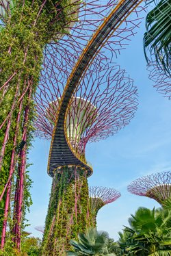 Singapore Supertrees in garden by the bay at Bay South Singapore. Image Cornfield /Shutterstock